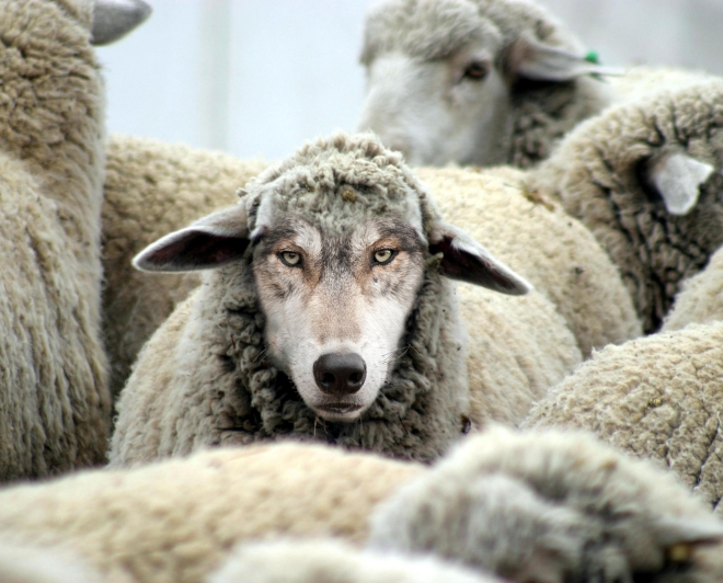 Ethan-Vanderbuilt-A-Wolf-in-Sheeps-Clothing